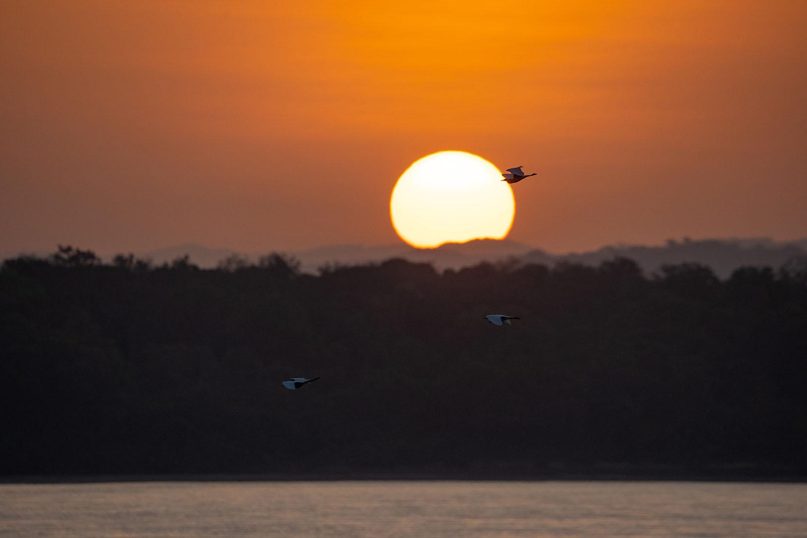 ave volando rio colombiano cavfish colombia